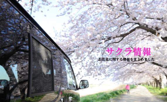 春のアウトドア お花見情報